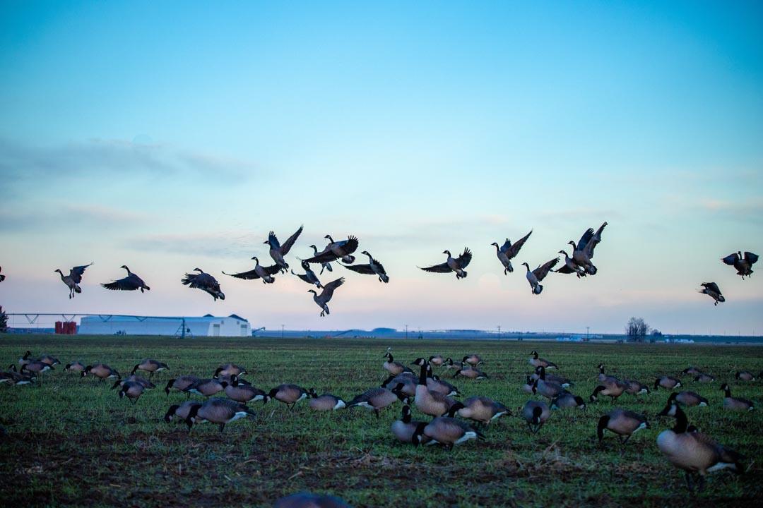 Private Hunting, Fishing & Venue | Othello, WA | Eagle Lakes Ranch Lodge